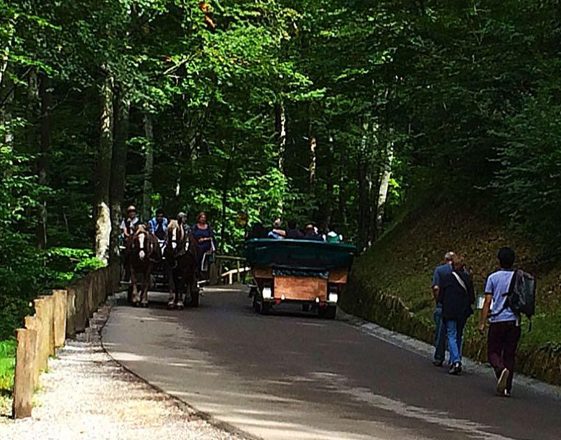 Neuschwanstein horse & cart
