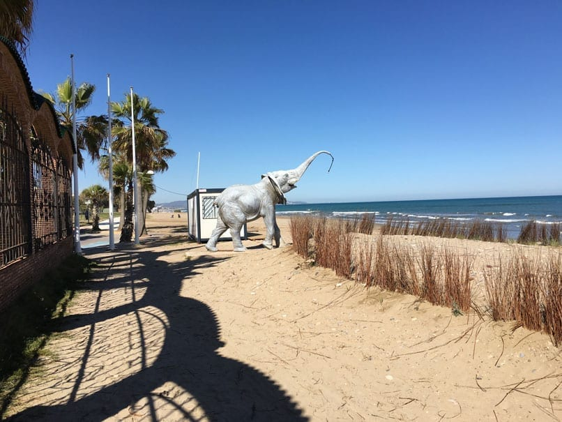 Elephant Shower on beach
